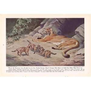1943 Puma Mountain Lion Cougar   King of Cats and His Court   Vintage