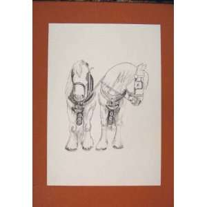 Pony Horse Shetland Fine Old Art Sketch Drawing Animal