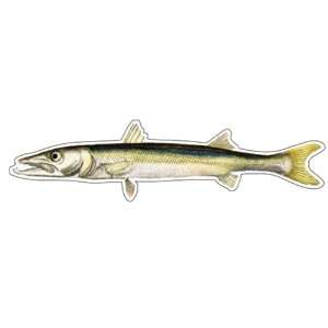 BARRACUDA  Fish Decal  window sticker car truck fishing